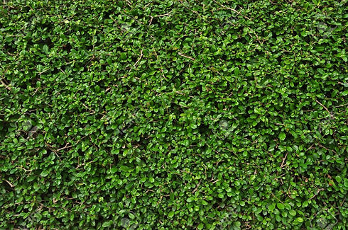 20351680-green-leaves-wall-texture-backg