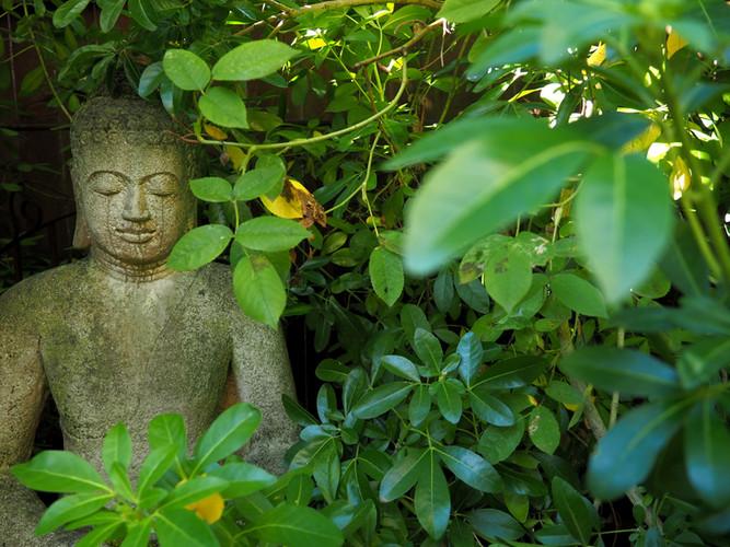 Relax in our zen garden