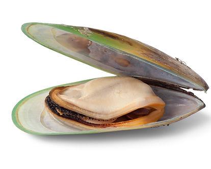 Mussel.jpg