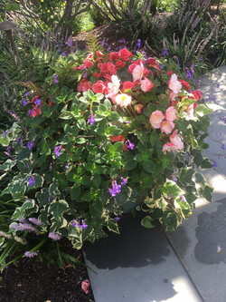 Potted Annuals