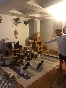 Alan David Pritchard and his cats