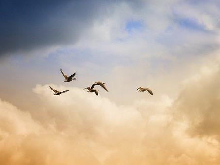 Fünf Freiheiten