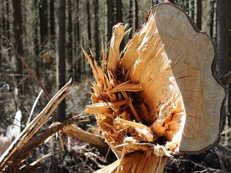 Die Geschichte vom Holzfäller