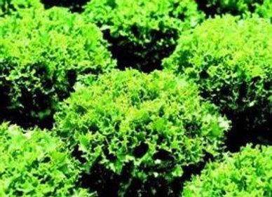 Lettuce Cancan