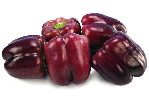 Sweet Peppers Purple Star