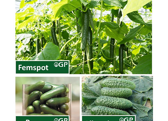 Cucumber Mixed Plant Pack