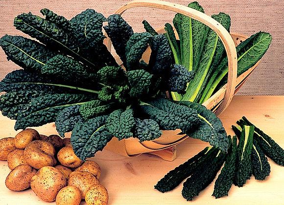 Kale Borecole Black Tuscanny