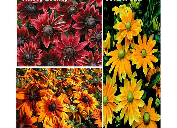 Rudbeckia Mixed Bedding Pack