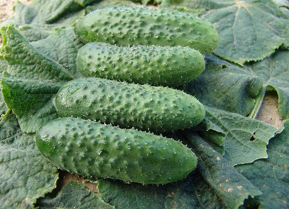 Cucumber F1 Alhambra (pickling)