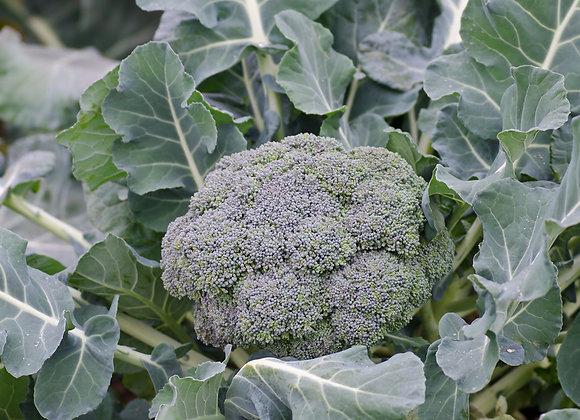 Broccoli (Calabrese)
