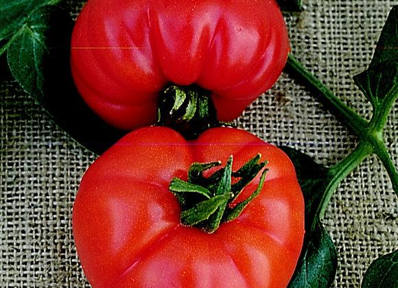 Tomato Beefsteak Super Marmande