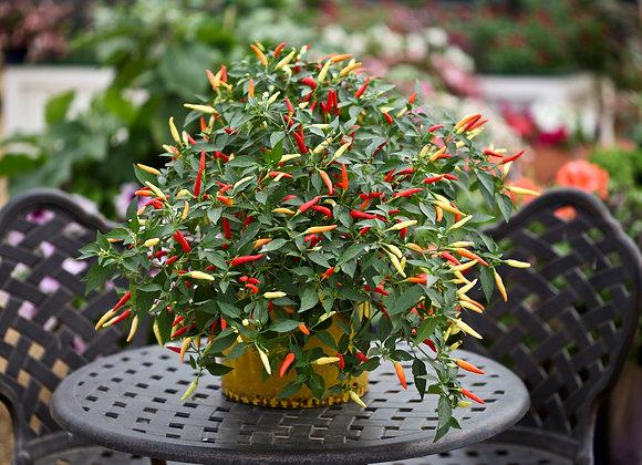 Hot Pepper Basket of Fire