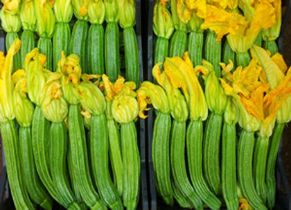Courgette Pantheon