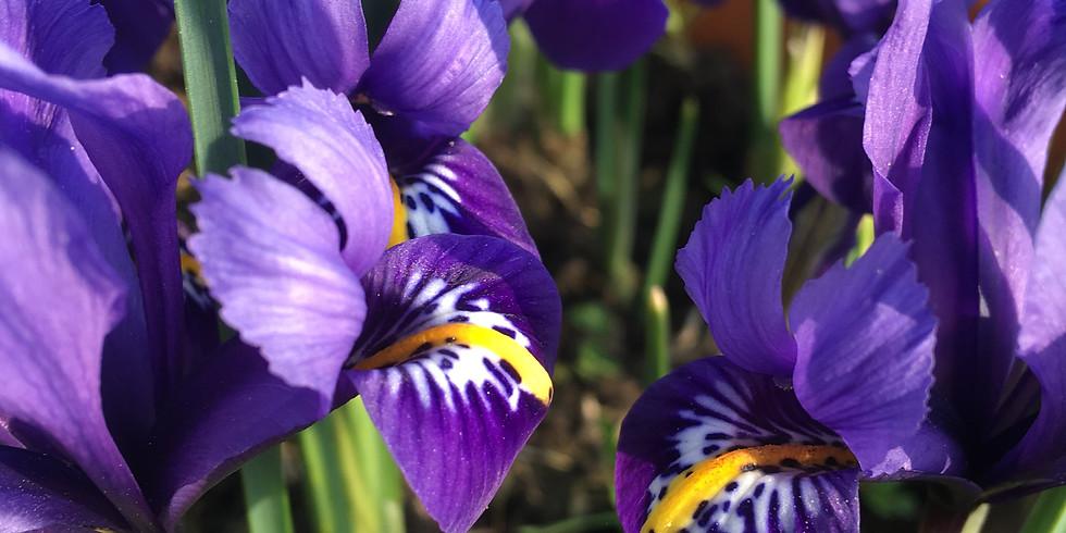 Online Garden Plants Opening At Stanford Nursery Doddington