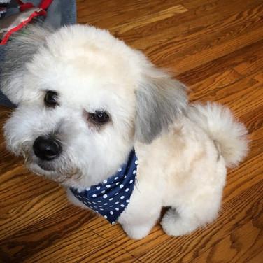 Groomingville Dog 8.jpg