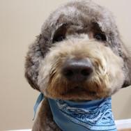 Groomingville Dog 6.jpg