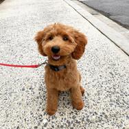 Groomingville Dog 1.jpg
