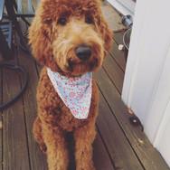 Groomingville Dog 10.jpg
