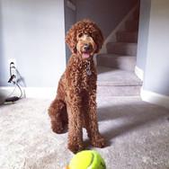 Groomingville Dog 7.jpg