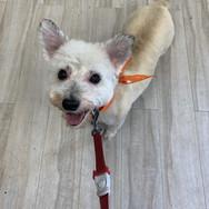 Groomingville Dog 2.jpg