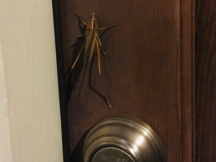 A Letter to the Murderous, Homicidal Insect Who Met Me At My Door Last Night