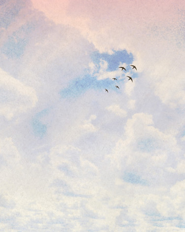 Swifts and clouds