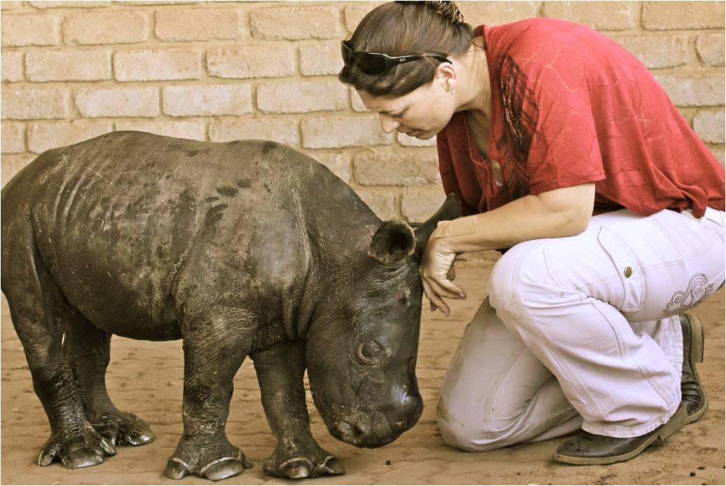 RhinoCalf