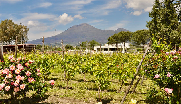 Where to go in Pompeii - Bosco de Medici winery