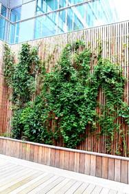 mur de végétaux.jpg