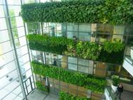 mur de végétaux 2.jpg