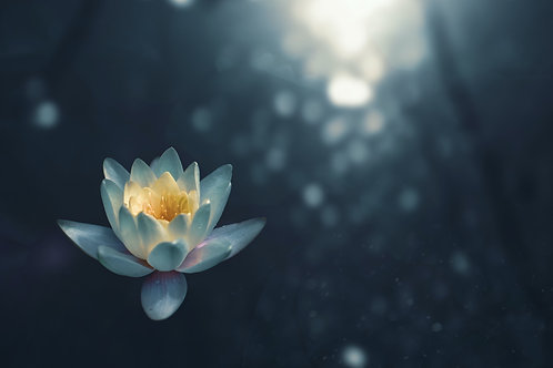 Meditation for Learning & Growing