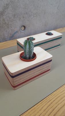 Cactus Holders