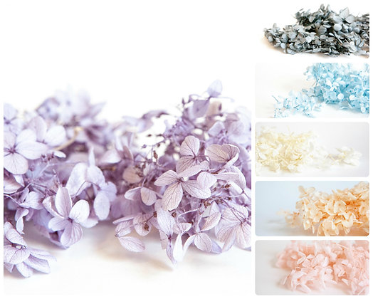 9g Dried Hrydrangea (3oz) - CHOOSE COLOR