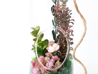 DIY Succulent Arrangement {kit 004}