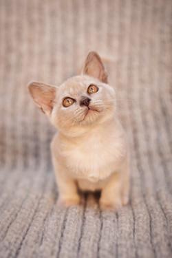 pet portraits cheshire