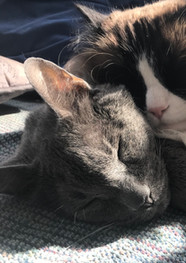 Moby and Toby are each other's favorite pillows.