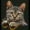 kitty peeking