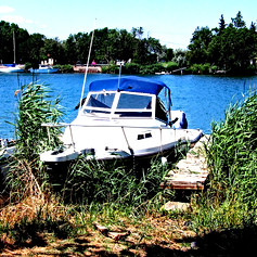 Boat hiding in the weeds