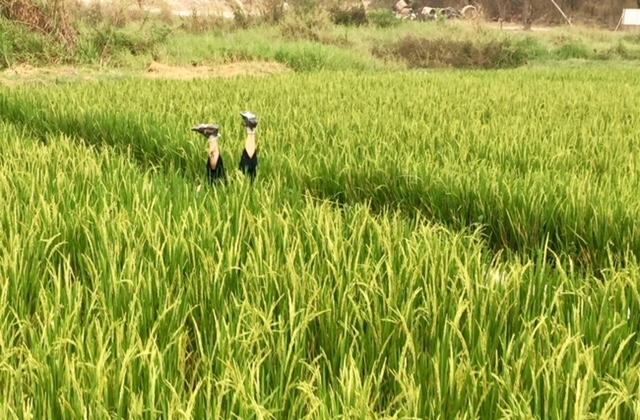 Chiang Mai has turned my world upside down