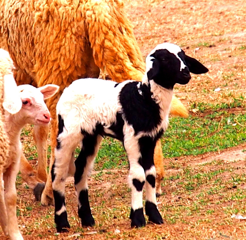 Farm Yard anticipation