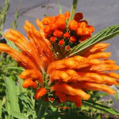 bright orange flower