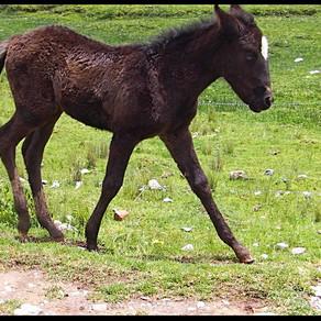 """Vamonos!""  Cusco on horseback."