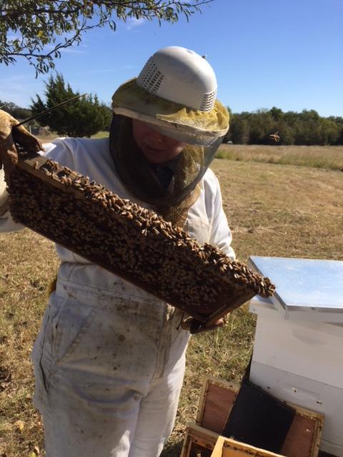 2017_10_11 dead bees_01_edited.jpg