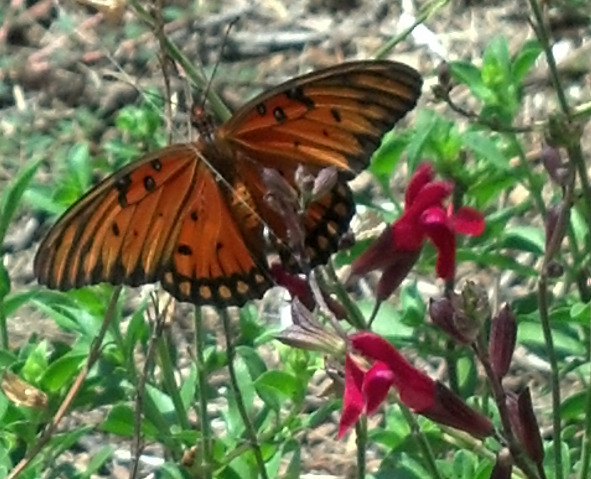 2014_08_22_Insects_monarch butterfly_02_edited