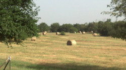 2014_07_12_hay and shredded_05