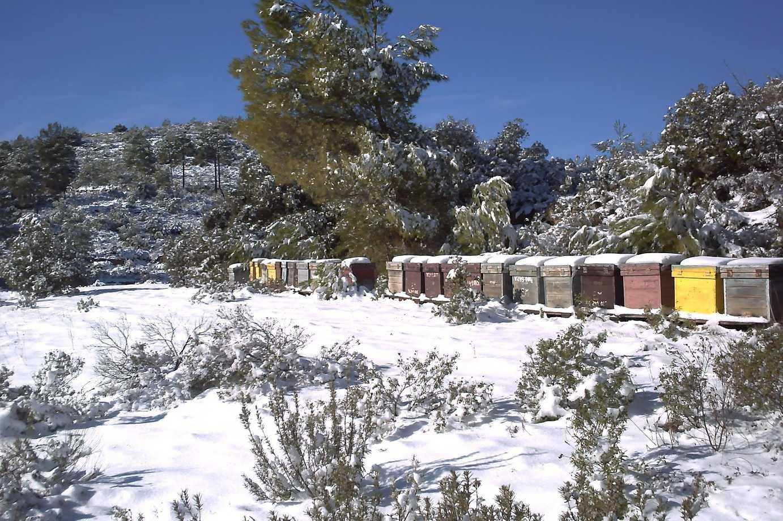 Colmenar de Boche nevado