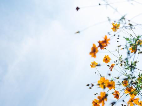 Flânerie: lợi ích của thời gian thư giãn, an tĩnh
