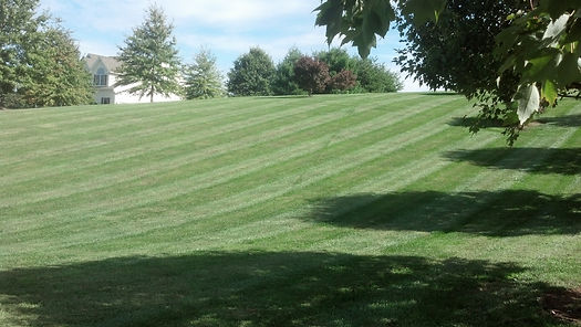 Freshly manicured lawn by T.A.P.'s Landscaping, LLC.