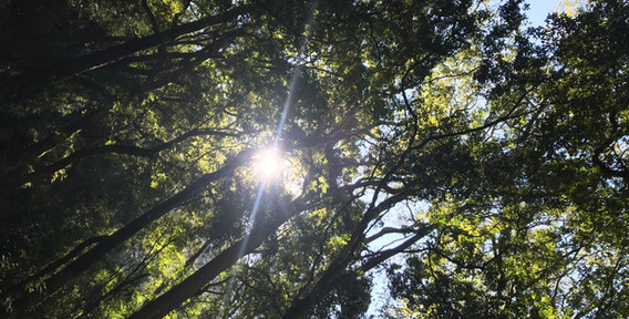 Yellowood forest.jpg