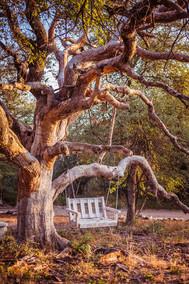Old Motswiri Tree
